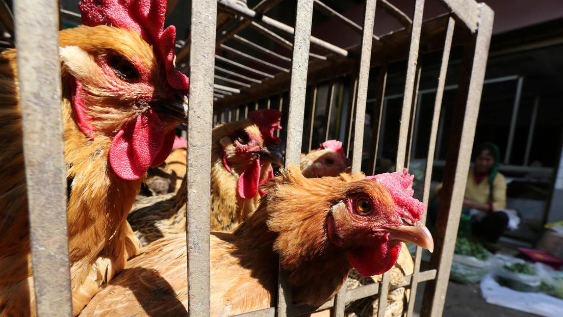 Weltweit erster Patient mit H10N3-Vogelgrippe: China schätzt Ausbreitungsrisiko als sehr gering ein