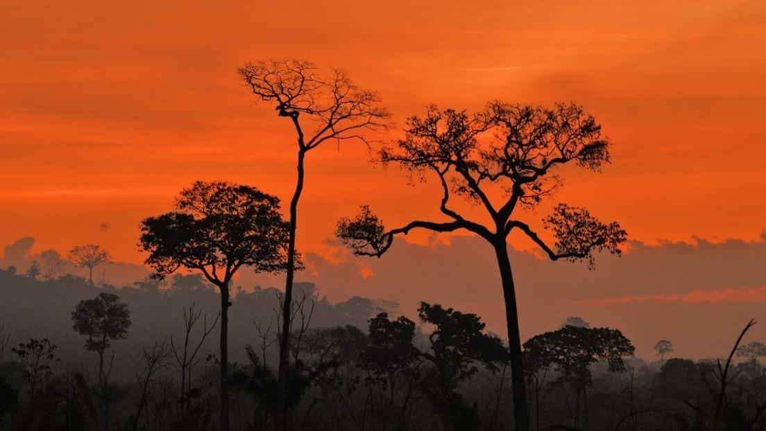 Am Amazonas brennt es wieder