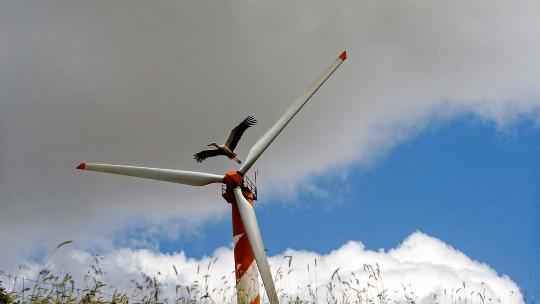 Windräder sind Todesgefahr für Vögel und Fledermäuse – Können neue Technologien helfen?
