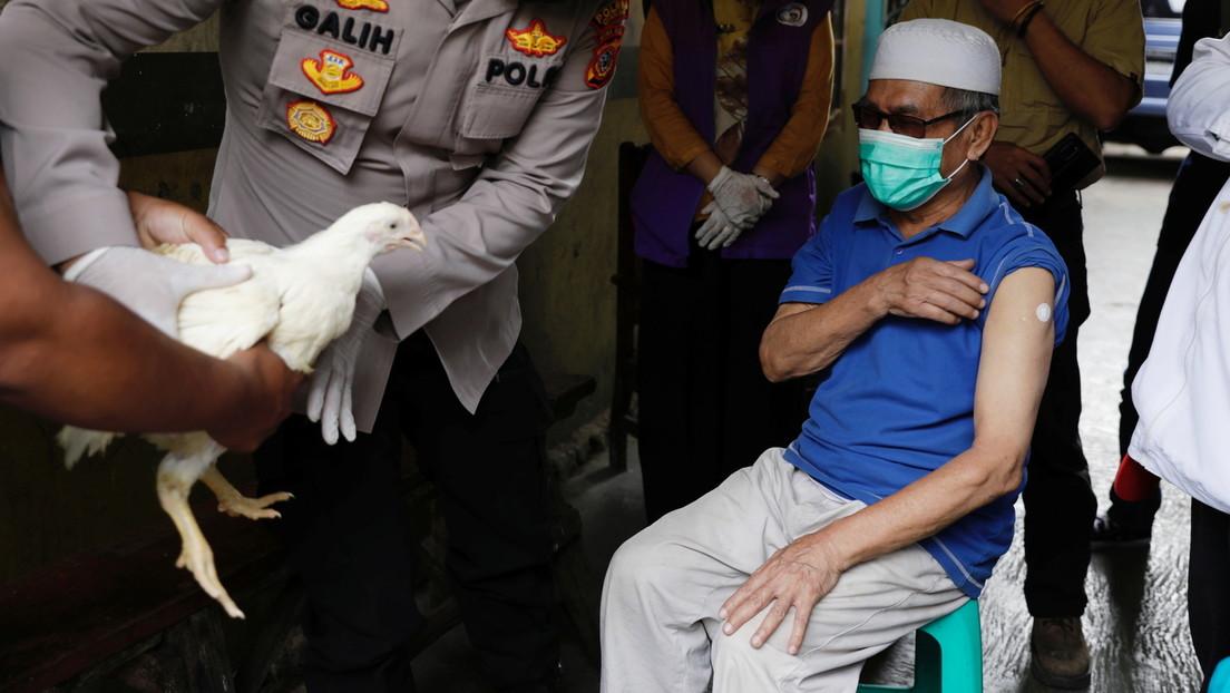 Indonesische Behörden regen Einheimische zu Corona-Impfung mit Hühnern an