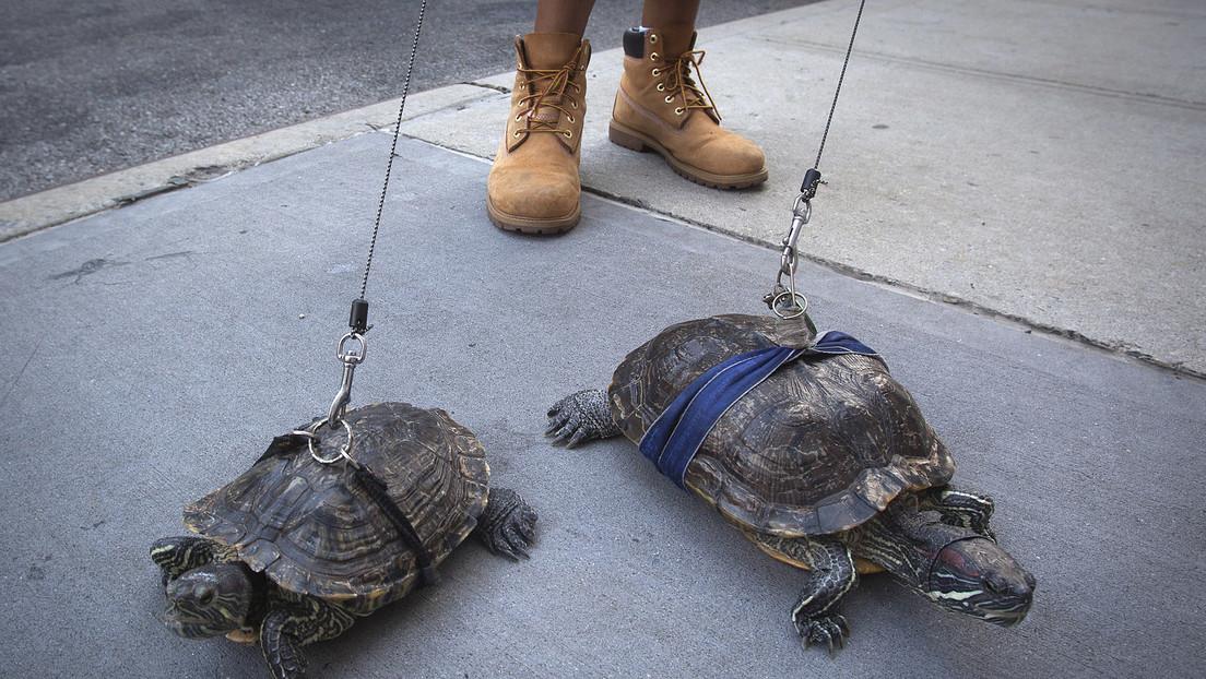 Schildkröten küsst man nicht - Gesundheitswarnung nach Salmonellen-Fällen in den USA