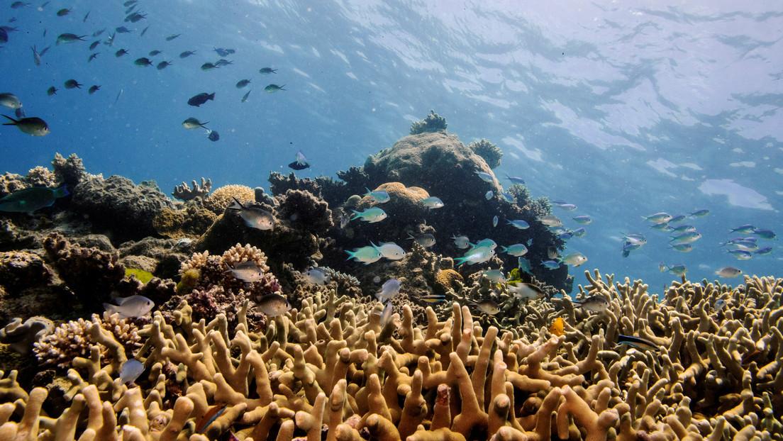 UNESCO will Great Barrier Reef als gefährdete Weltnaturerbestätte einstufen – Australien protestiert