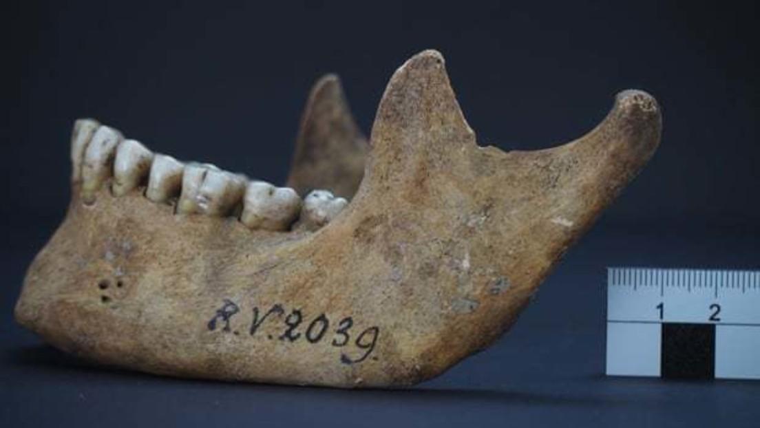 Pandemie schon vor 5.000 Jahren? – Archäologen finden Pest-Bakterien in Steinzeitmenschen