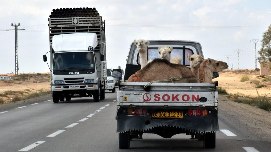 Zwei schwere Unfälle mit Lastwagen und Touristenbussen – 27 Tote in Algerien
