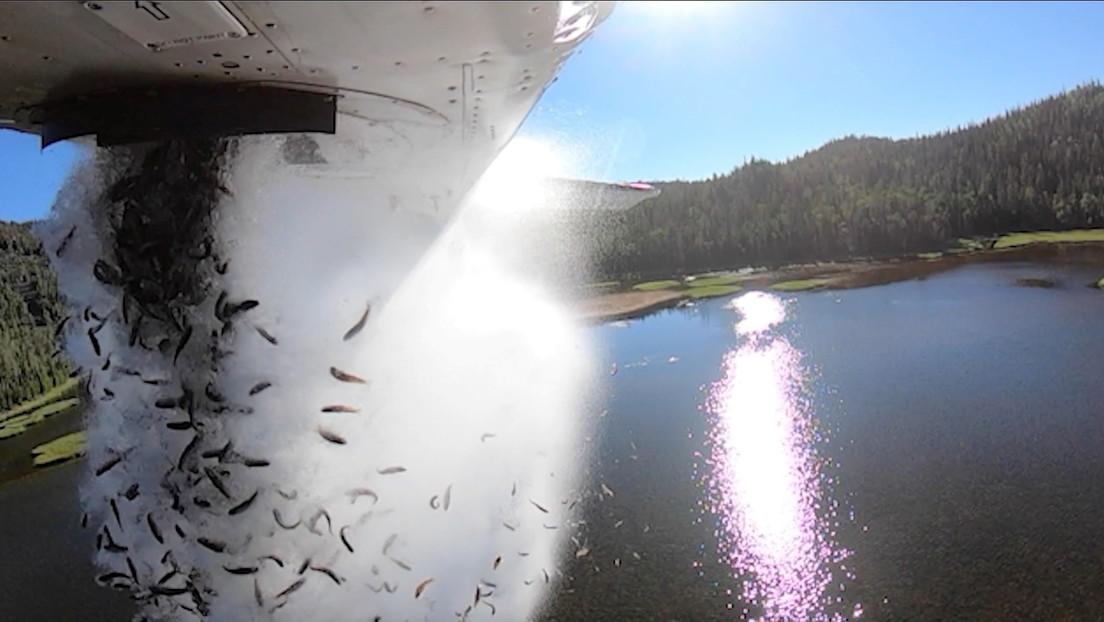 Luftlandetruppen mit Flossen: US-Behörden bombardieren Seen in Utah mit Fischen