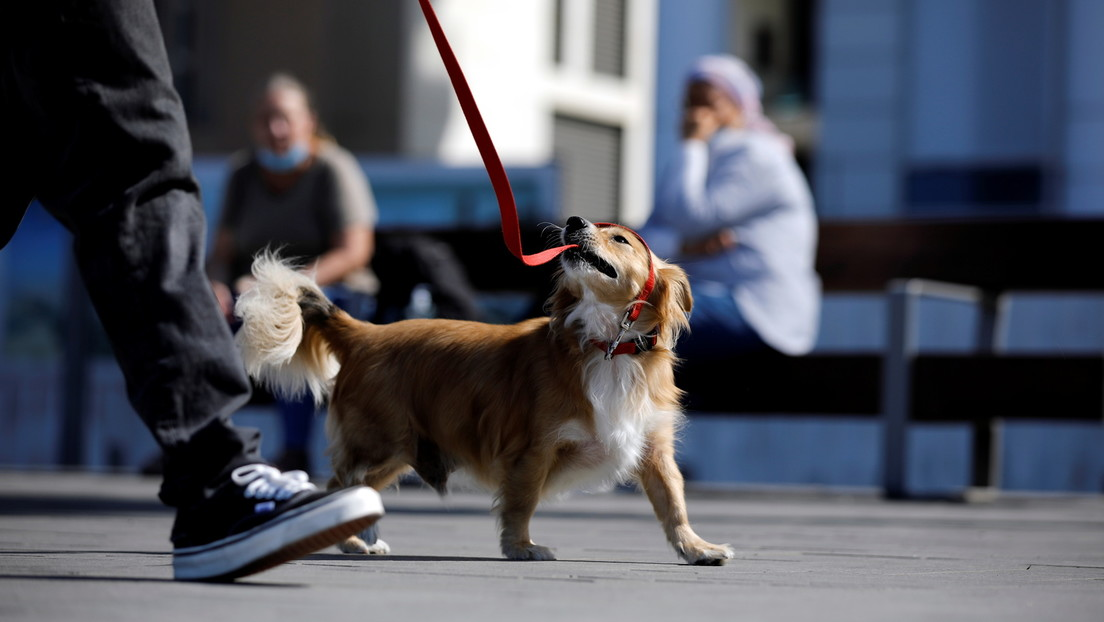 DNA-Proben gegen Kot: Hundebesitzer in Tel Aviv sollen künftig Genmaterial ihrer Vierbeiner abgeben