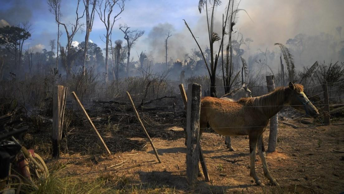 Amazonas-Regenwald stößt erstmals mehr CO₂ aus als er absorbiert