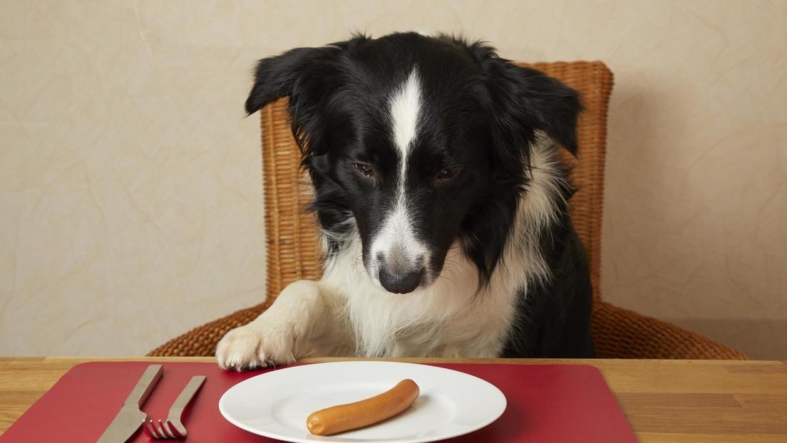 Bello am Drücker – Laut Studie würden Hunde Menschen wohl keine Leckerlis spenden