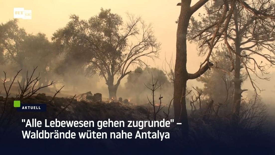 Viele Ferienorte evakuiert – Waldbrände toben an der türkischen Mittelmeerküste