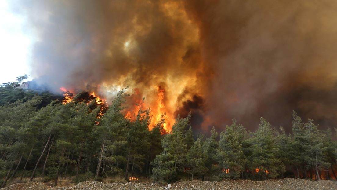 Griechenland und Türkei: Waldbrände und Temperaturen auf Rekordhöhe
