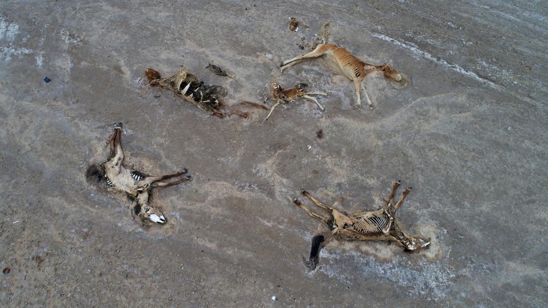 Extreme Dürre und großes Tiersterben in Kasachstan