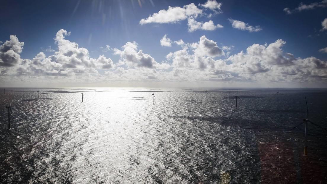 Windkraft auf dem Meer – Vögel verlieren immer mehr Lebensräume auf der Nord- und Ostsee
