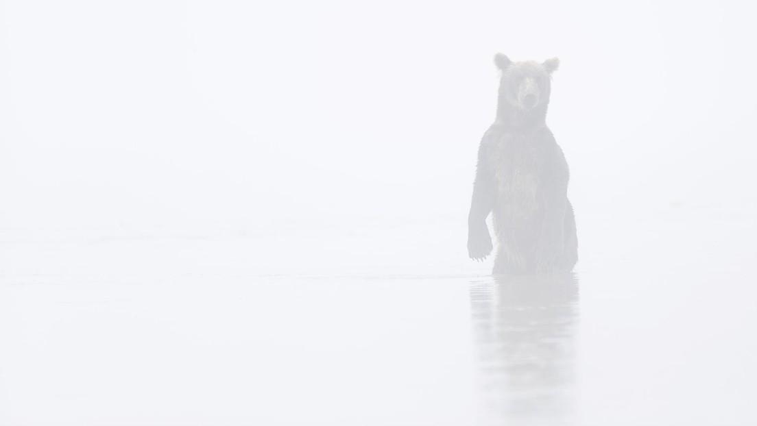 Russischer Abgeordneter bekennt sich zu Totschlag: Wollte Bären verscheuchen und traf Menschen