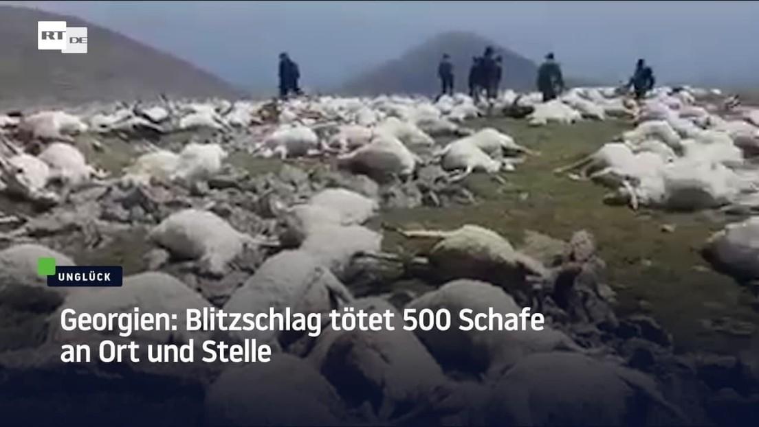 Georgien: Blitzschlag tötet 500 Schafe an Ort und Stelle