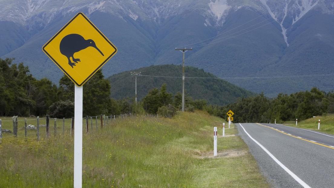 Kiwi-Population in Neuseeland im Aufwind