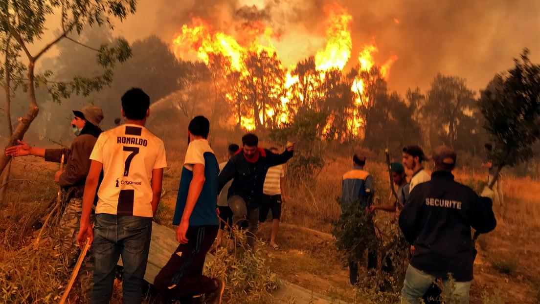 Waldbrände in Algerien: 61 Festnahmen nach Lynchmord an vermeintlichem Urheber