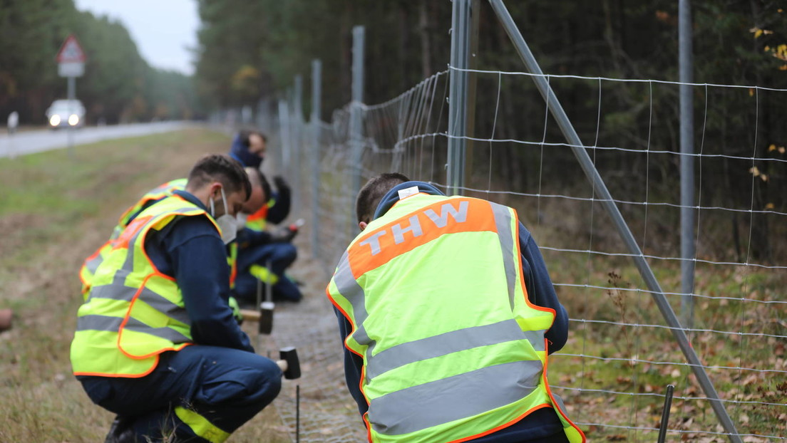 Schweinepest: Sachsen fordert intensivere Jagd auf Wildschweine – auch in Polen