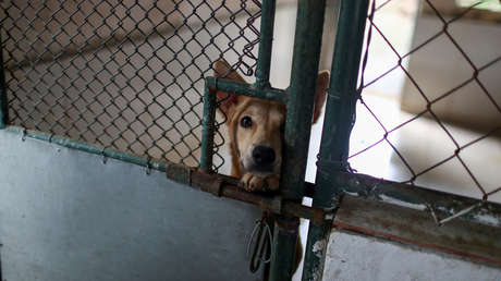"Australien: Freiwillige dürfen Tierheimhunde wegen ""Corona-Gefahr"" nicht abholen – Tiere erschossen"