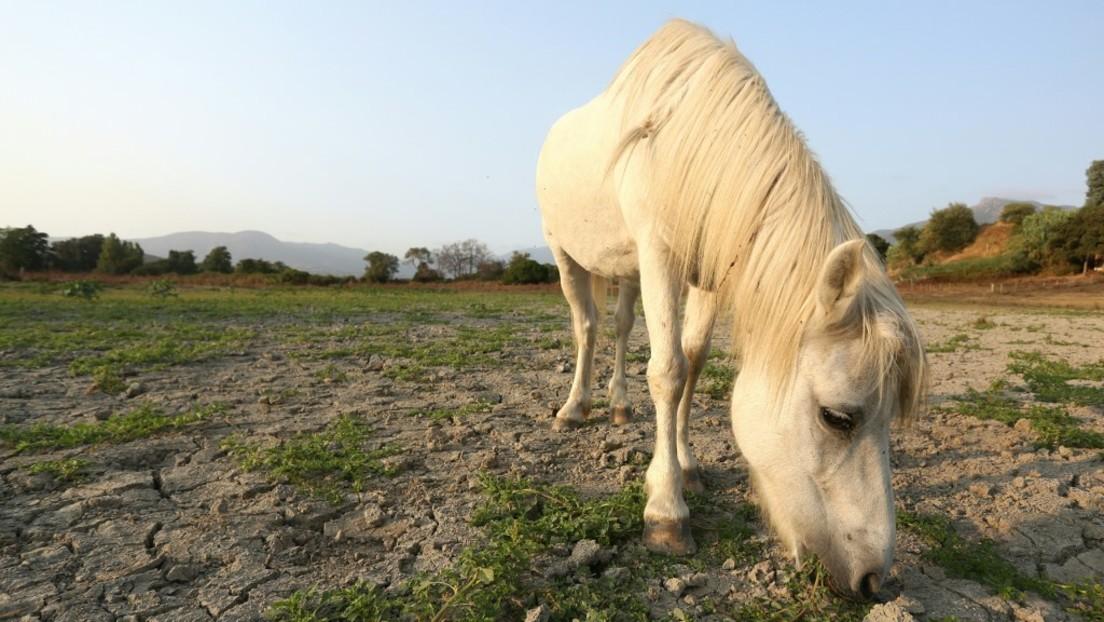 Pferde-Entwurmungsmittelgegen Corona?Australien, Kanada und USAwarnen