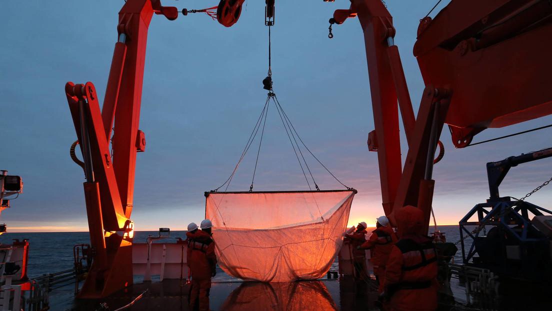 Wegen Nachfrage nach hochwertigem Fischöl-Ersatz: Industriefischerei bedroht Krill-Bestände