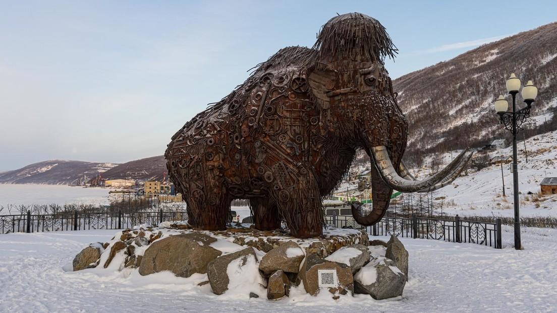 Zurück in die Eiszeit: Forscher wollen Mammuts wiederbeleben