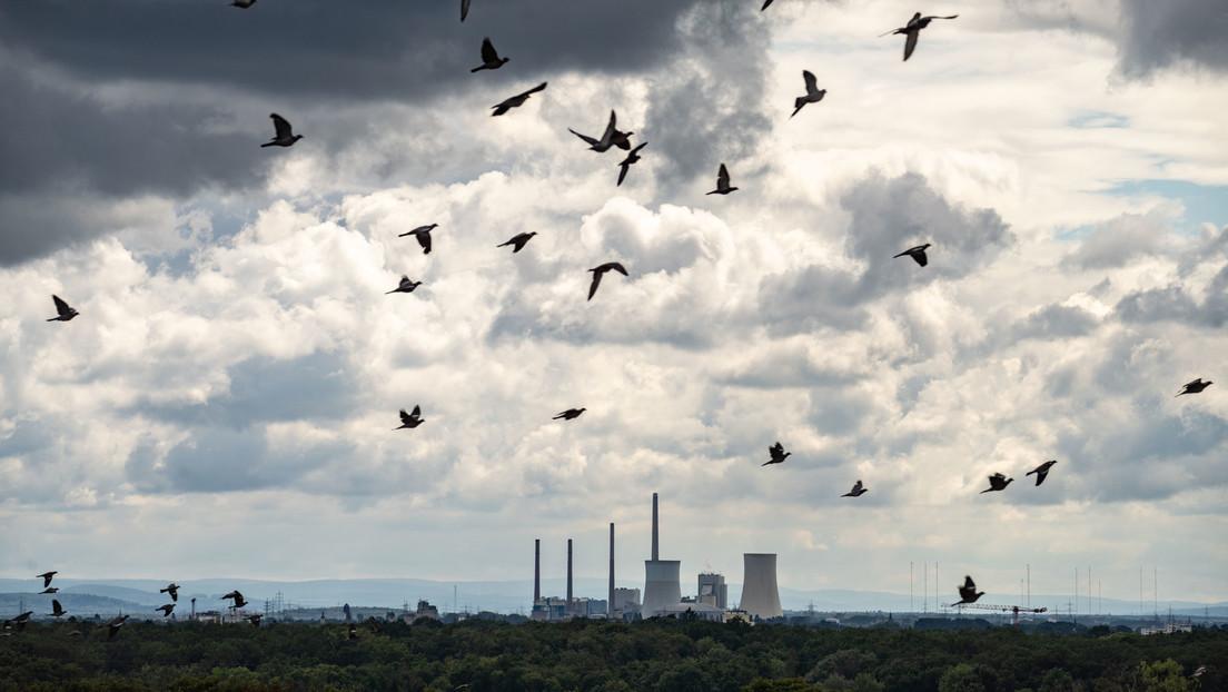 Studie zu Lockdown: Menschen litten, Vögel profitierten