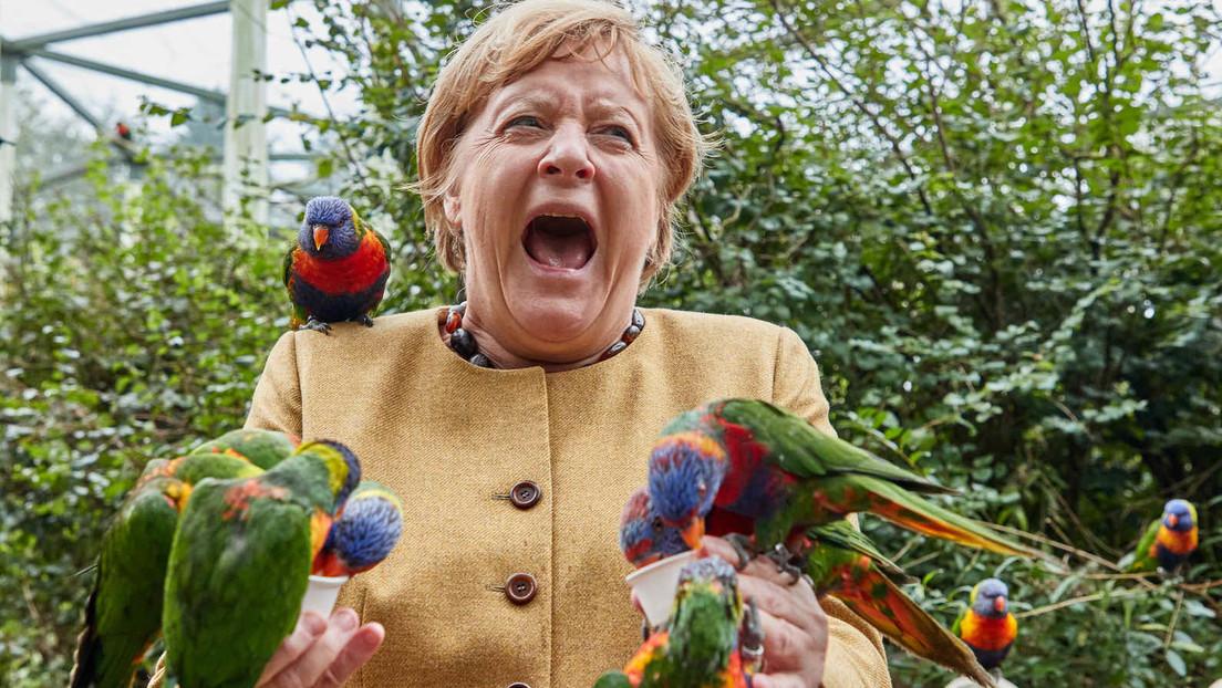 """Kurz vor """"ihrem Abflug"""" – Angela Merkel besucht Vogelpark Marlow"""