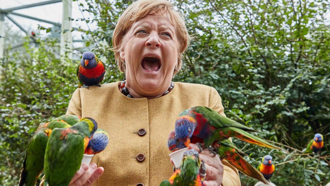 Nach Merkels Vogelschrei: Kreative Mems in den Sozialen Netzwerken
