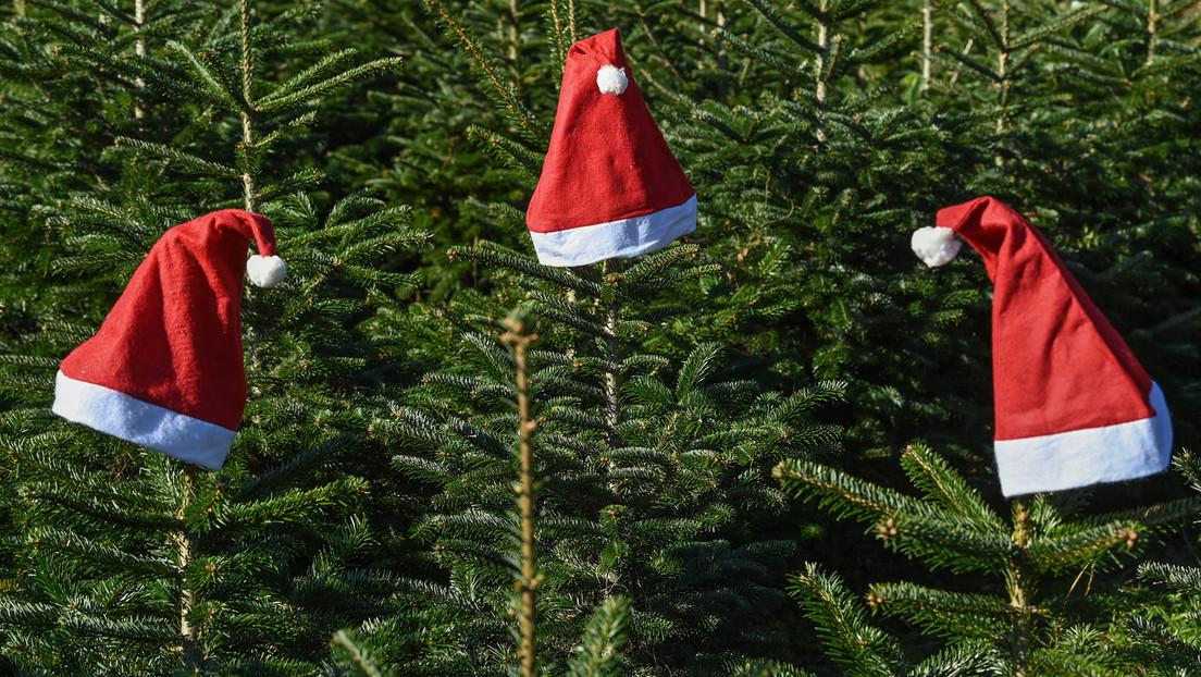 Inflation und Lieferengpässe: Preissteigerungen bei Weihnachtsbäumen erwartet