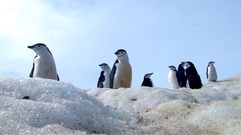 Антарктида: земля мечтателей (ТРЕЙЛЕР)