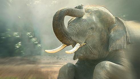 Когда улыбаются слоны