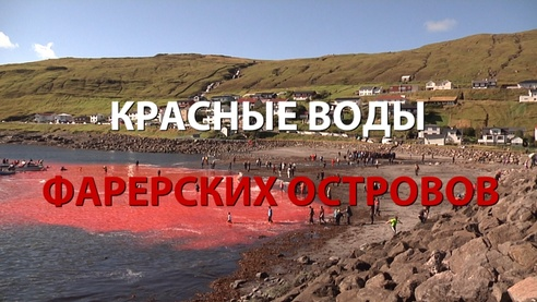 Красные воды Фарерских островов