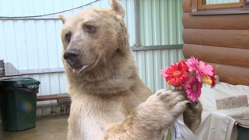 Один день с медведем Степаном