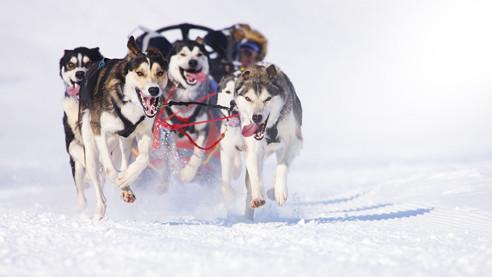 От Камчатки до Чукотки. «Берингия» — гонка на собачьих упряжках