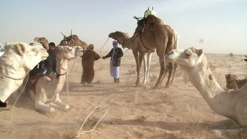 Сахара: зима в пустыне