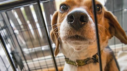 Собачья тюрьма (ТРЕЙЛЕР)