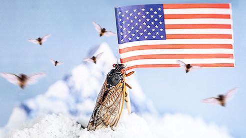 Возвращение цикад. Новое нашествие насекомых в США