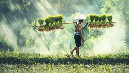 Взаимовыручка по-китайски. Как промышленные гиганты помогают бедным фермерам