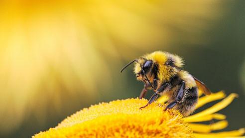 Количество насекомых сокращается. Чем это грозит людям?
