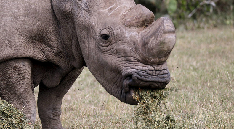Rhinos to get 'horn-cams' to catch poachers red-handed