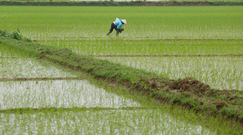 GMO rice can deliver double blow to global warming & hunger, scientists say