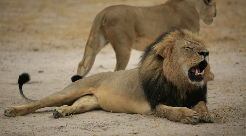 The hunting of Walter Palmer: Internet goes after 'lion killer' US dentist
