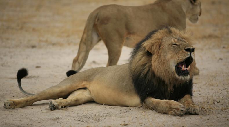 The hunting of Walter Palmer: Internet goes after 'lion killer' US dentist