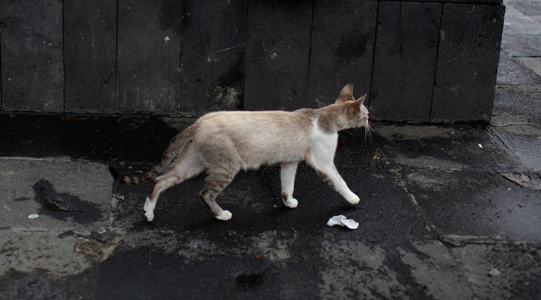 Australia's war on cats: 24-hour curfew planned for domestic felines