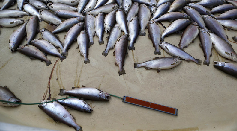 Boiling point: Hot water killing 50% of Columbia River's salmon population