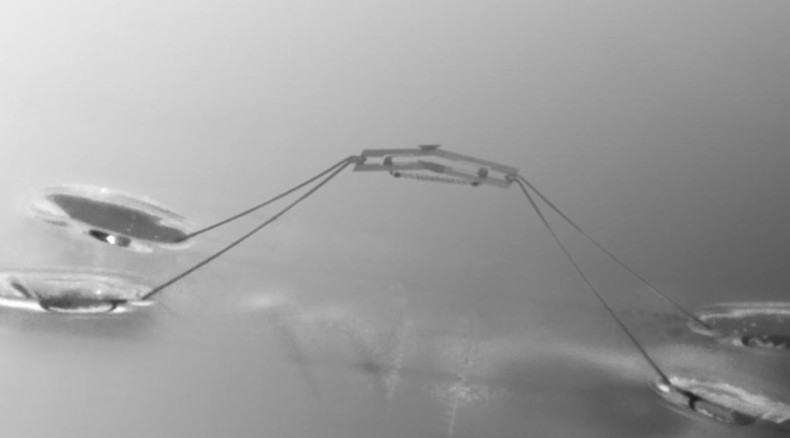 Robotic insect capable of 'jumping on water' just like water striders (VIDEO)