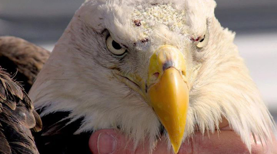 Winging it? Trump sued for using 'iconic' bald eagle photo without permission