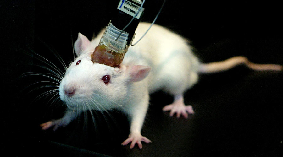Scientists wirelessly control mice with brain implant (VIDEO)