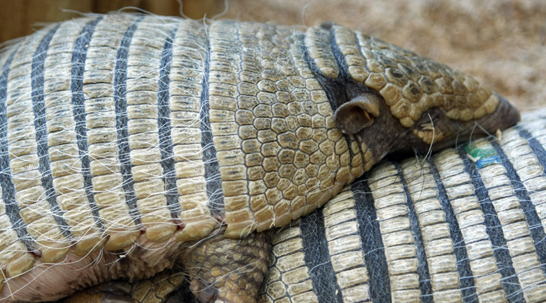 Armadillo strikes back! Texan man in hospital after trying to shoot animal