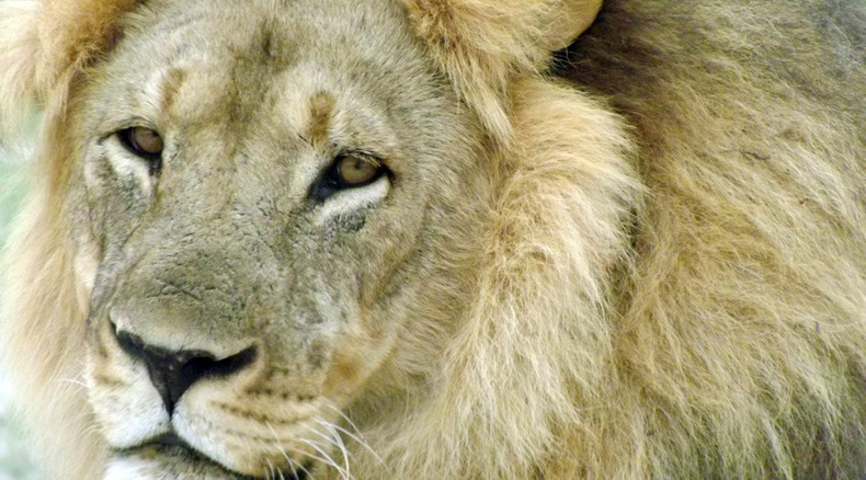 Cecil the Lion's 'brother' Jericho 'feared killed by hunters'